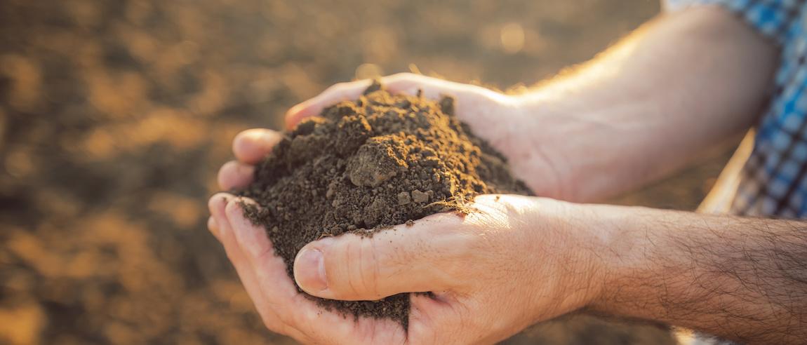 gleba mało żyzna