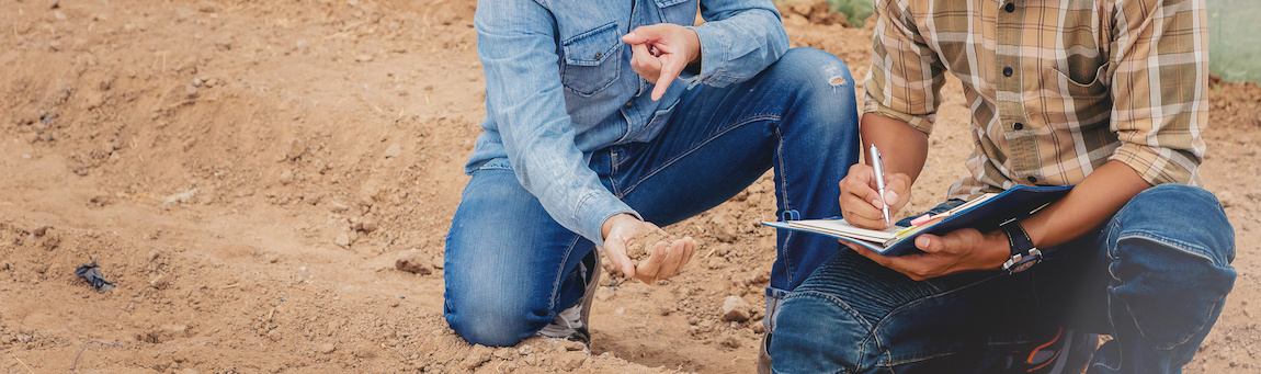 struktura gleby