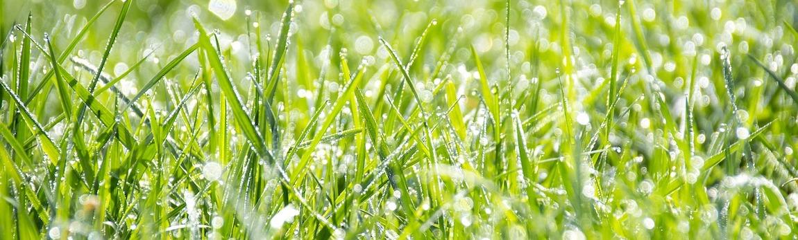 Kiedy i jak siać trawę