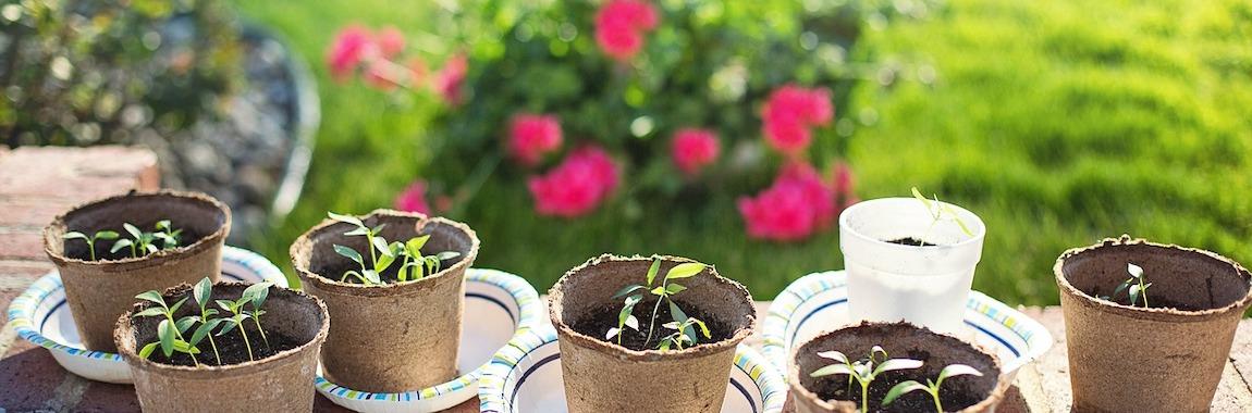 przesadzanie roslin w ogrodzie