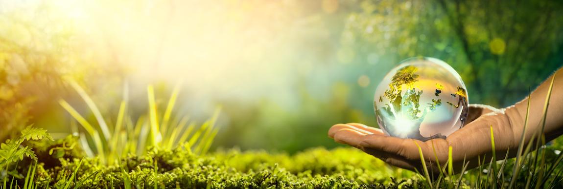 ekologiczne nawożenie roślin
