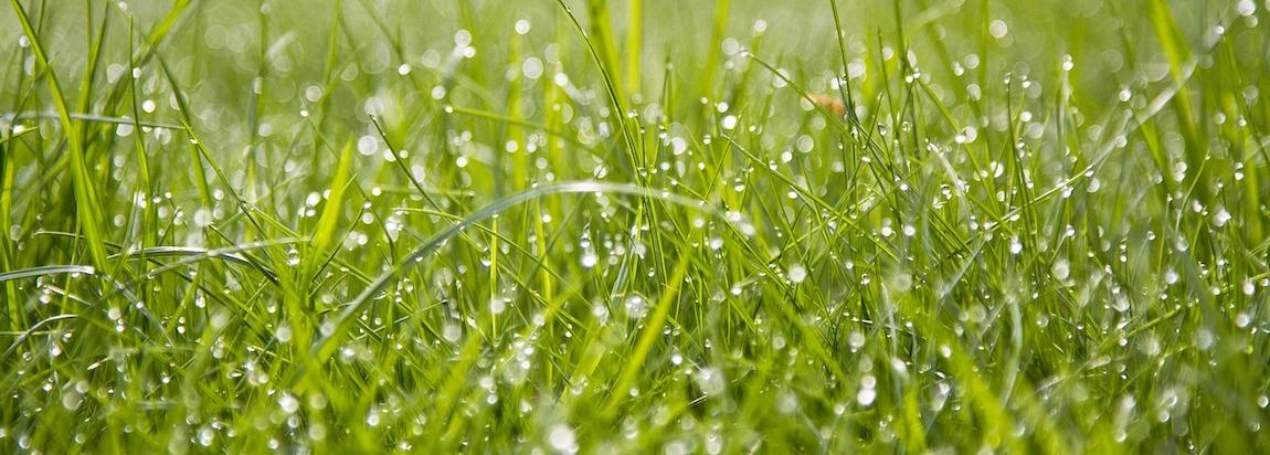 jak przygotowac ziemie pod trawnik
