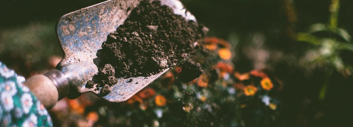 Jak zbadać pH gleby