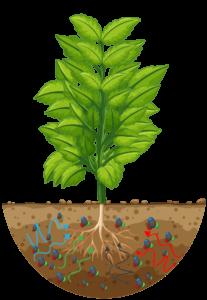Hydrożel TerraCottem - synergia działania