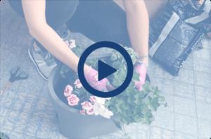 Kwiaty na słonecznym balkonie